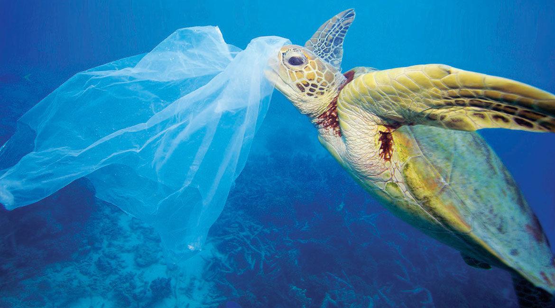 turtle swim in a dirty ocean
