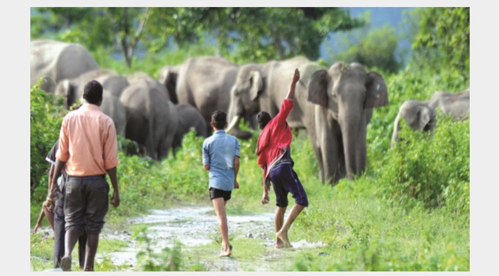 Keep away the Elephant