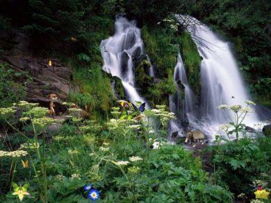 Greenery-can-make-water-fall