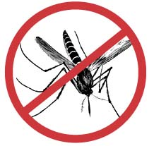 Mosquitoes-carry-no-mosquito