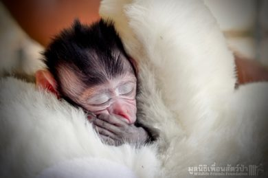 wildlife-friends-littel-monkey