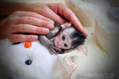 wildlife-friends-littel-monkey-hand