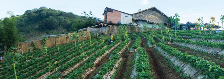 Samoeng loop farm