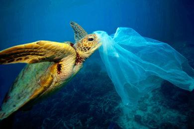 Eight To Zero Turtle Plastic