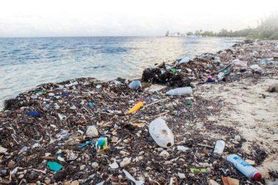 waste in the seashore