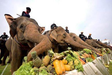 Elephants are Good