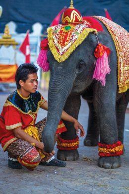 Baby Elephant in Ayutthaya