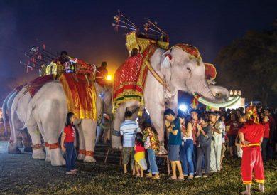 Albino Elephant in Ayutthaya
