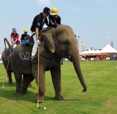 Kings Cup Elephant