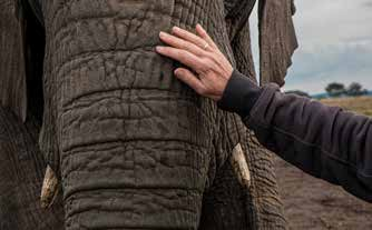 care for the elephants