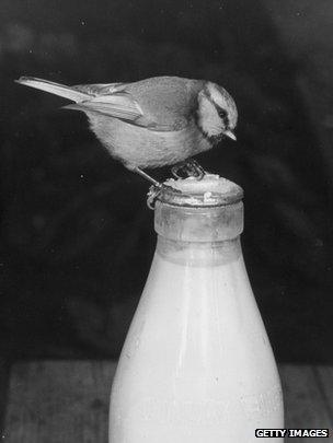 A yogurt with bird
