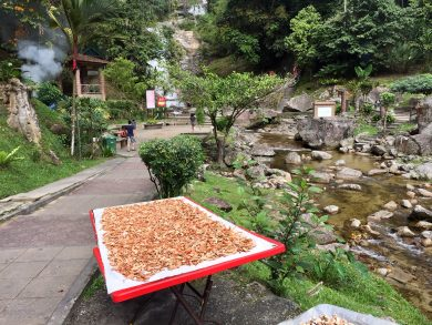 Tea plantations Malaysia